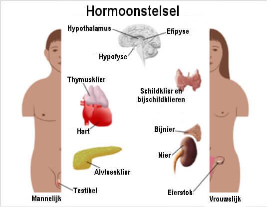 Hormonen in balans met doterra